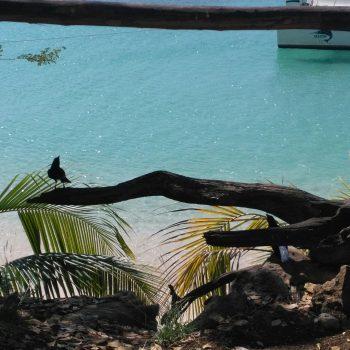 Île Cayo Saetia, Cuba ❤